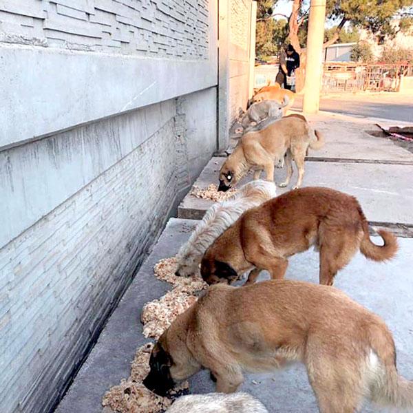 Fütterung von Streunerhunden, Türkei