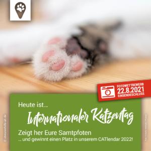 Internationaler Katzentag 2021 – Streunerhilfe Aschaffenburg e.V.